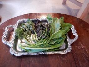 当日使われた山菜各種